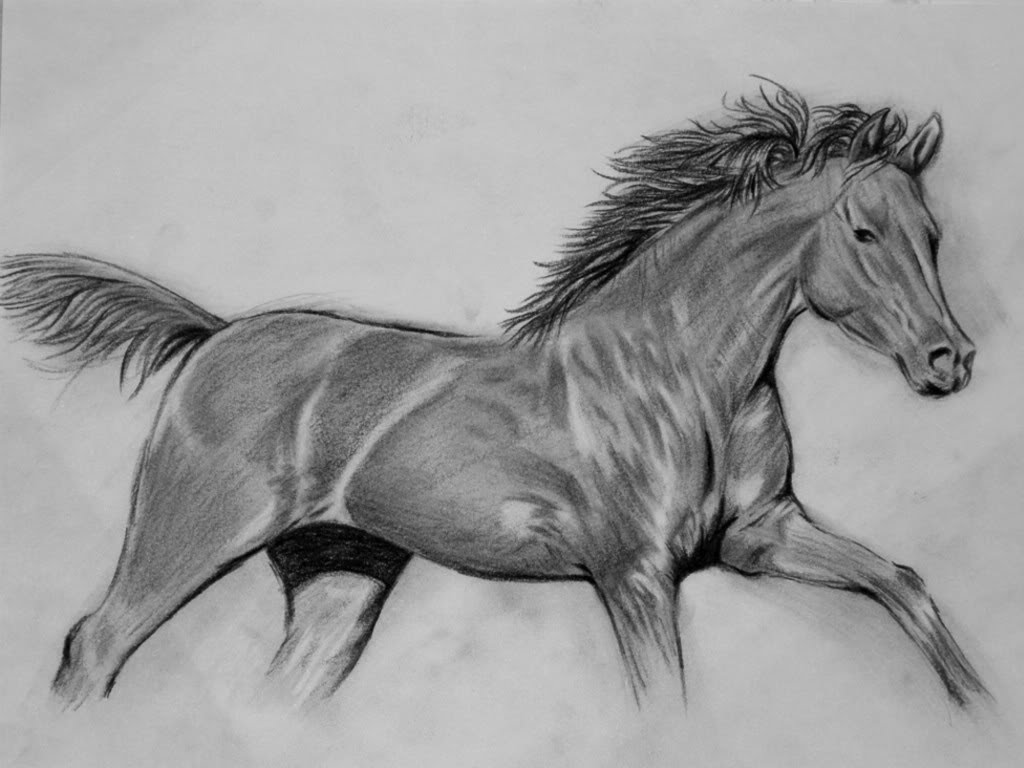 How To Draw A Realistic Horse Step By Step Video For Beginners And Kids In Easy Way